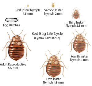 Bed bug detection inspection lifecycle
